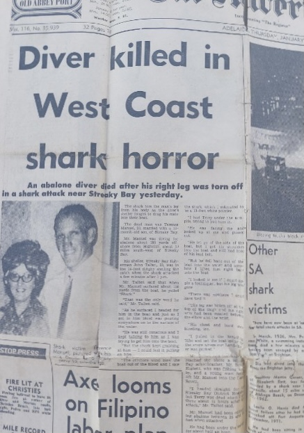 White shark jaw implicated in the death of an abalone diver in 1974